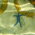 The man in the sea. Or just a little blue starfish ? (Photo by Bruno)
