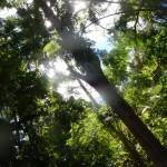 Ueppige, tropische Vegetation