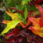 Diese erinnert an Herbstfarben