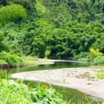 Der Fluss mit ueppigen Bambusbuescheln im Hintergrund