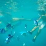 Viele Fische und Bruno und Silke (SY Tamora) im Hintergrund