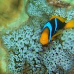 Hello, Nemo !