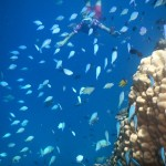 Diving into the real beauty of Fiji: underwater
