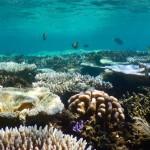 Wunderschoene Fische im flachen Wasser ueber den Korallen