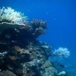 Wunderschoene Korallenlandschaften