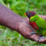 Und hat einen bunten, zahmen Papagei mit dabei